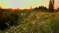 MS DS Meadow Flowers At Sunset video