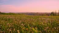 Meadow full of wildflowers video