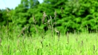 Meadow grass and flowers video