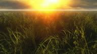 Meadow grass video
