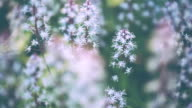 Meadow in pastel tones video