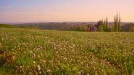 Meadow in springtime video