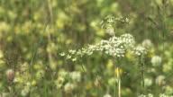 HD: Meadow vegetation video