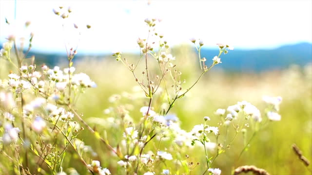 Meadow with spring flowers video