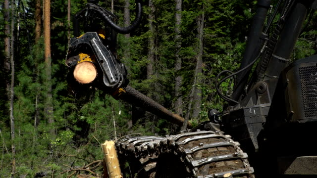 Mechanical arm cuts a freshly chopped tree trunk in a forest video