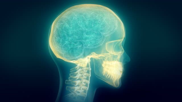 Medical video background. Head X-Ray animation. Skull highlighted. Loop. video