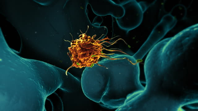 Medical video background - macrophage immune cell with ecoli SEM video