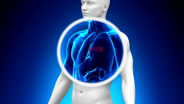 Medical X-Ray Scan - Heart video