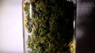 Medicinal marijuana buds rotating display video