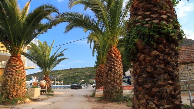HD DOLLY: Mediterranean Palm Trees video