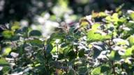 Mediterranean vegetation video