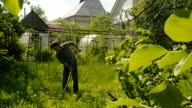 A men at mowing the grass on the traditional way with a scythe on the sunny day video