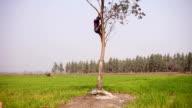 Men climbing down from tree video