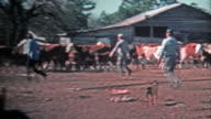 1971: Men corralling cattle for the local meat market. video