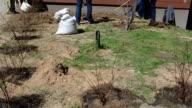 men ground shovel rake video