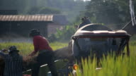 Men threshing rice in Thailand. video