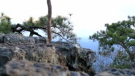 men Walking Backpacker and Camp Forest Adventure Travel  Relax Concept video