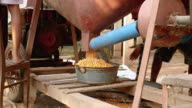 Men working with a corn sheller machine to remove corn kernels from cobs video
