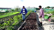 Mentor Teaching Traditions African Organic Farmers video