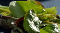 Mesclun Lettuce Leafs Fall in Slow Motion onto a Pile of Spring Mix video
