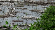 Mexican Swamp Land - Zoom Out video