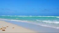 Miami Beach video