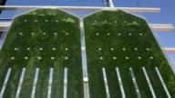 microalgae video