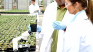 Microbiologists study plants in professional greenhouse laboratory video