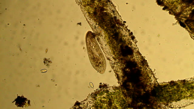 Microorganisms - film montage video