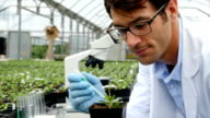 Mid adult Caucasian scientist gives plant nourishment in greenhouse video