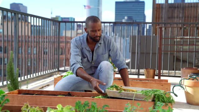 Mid adult male watering the plants in his Rooftop garden video