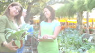 Mid-adult Caucasian female sales clerk assists customer in farmer's market or plant nursery video