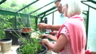 Middle Aged Couple Working Together In Greenhouse video