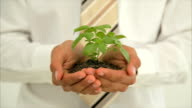 Midsection close-up of businessman holding seedlings in office video