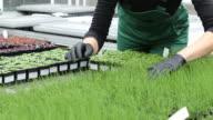 Midsection of farmer examining saplings video
