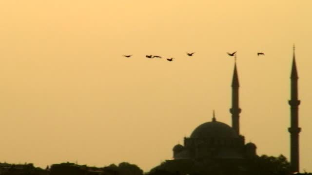 Migratory birds from Turkey. Suleymaniye Mosque video