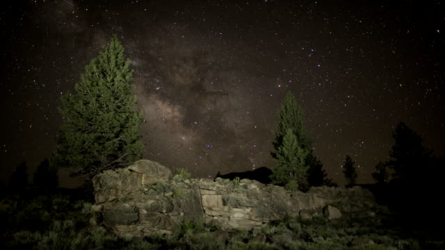 Milky Way and pine trees video