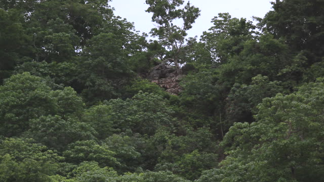 Million of bats flying from cave at dusk video