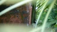 millipede video