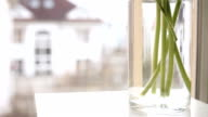 Minimalistic indoor scene: flowers being put into the vase on the windowsill video