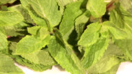 Mint herb on white background video