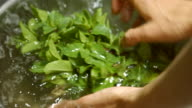 Mint in clean water. video
