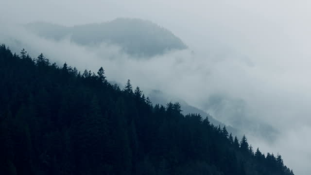 Mist Moving Over Forest Mountainside video