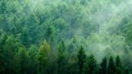 Mist Moving Over Forest Timelapse video