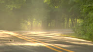 Mist of the morning on a country road #2 video