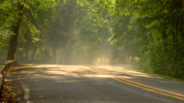 Mist of the morning on a country road video