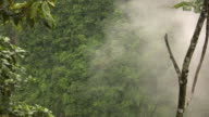 Misty cloudforest in the Ecuadorian Andes video
