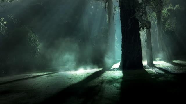 Misty forest 1 - HD720, NTSC, PAL video