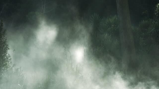 Misty forest 3 - HD720, NTSC, PAL video