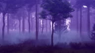 Misty forest at sunset time lapse video